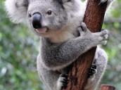 Nicolas  - Australië -